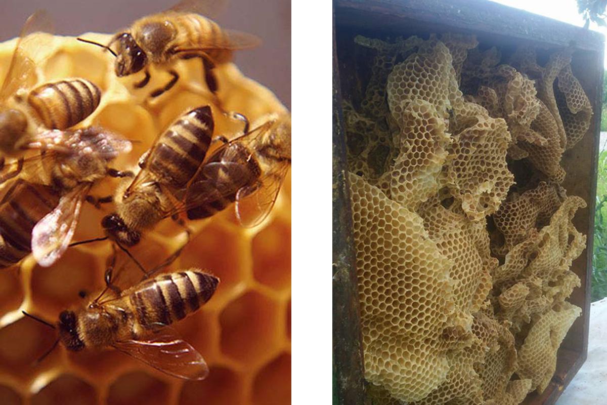 alveare api azienda agricola canais
