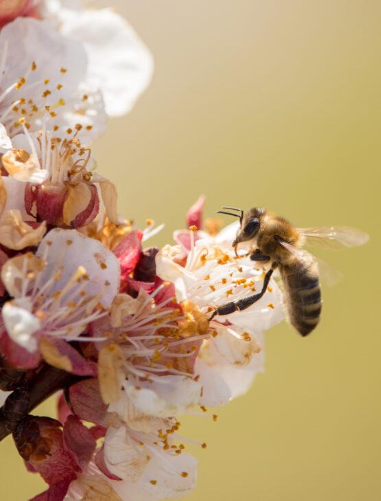 api iniziativa sostenibile adozione alveare